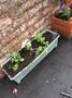 Gardening club (4).JPG