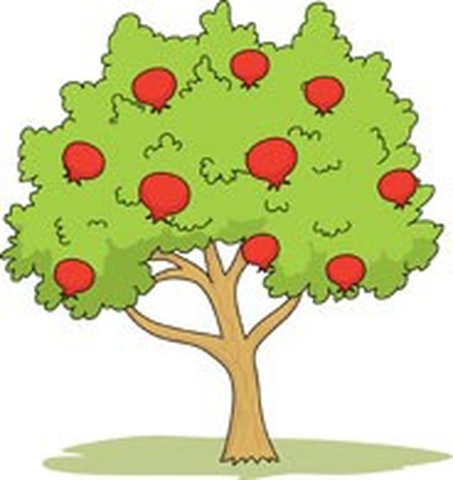 Cherry Class- Year Four