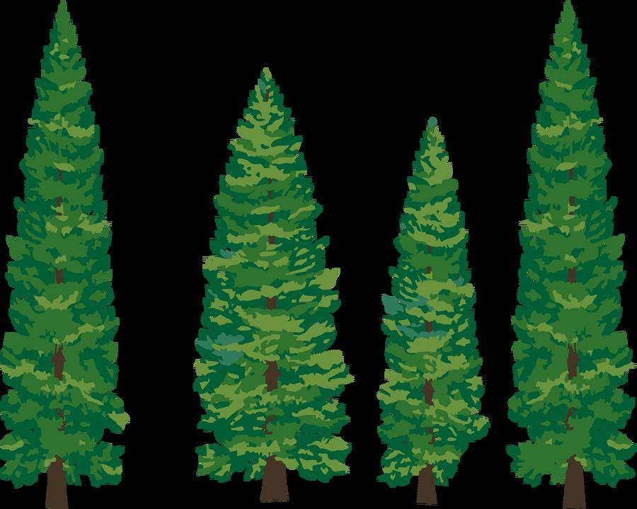 Redwood Class- Year Six