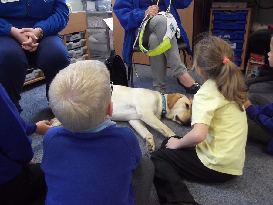 We learned about the important jobs that guide dogs do for people who cannot see.