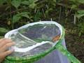 butterflies (8).JPG