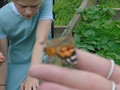 butterflies (14).JPG