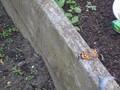 butterflies (17).JPG
