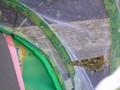 butterflies (18).JPG