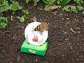 butterflies (19).JPG