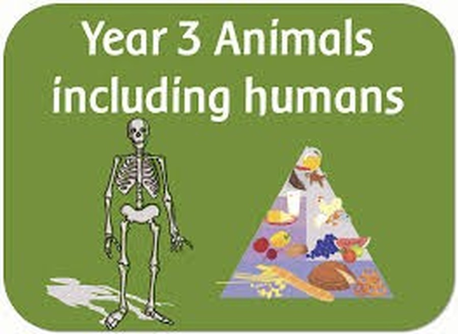 We will be learning about animal nutrition and muscles and bones