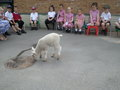 Acorn lamb (2).JPG