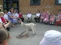 Acorn lamb (3).JPG