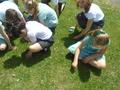 grass (6).JPG