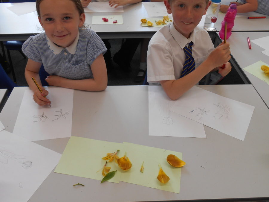 Science - learning about the parts of a flower.