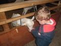 farm visit 2017 033.JPG