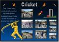 cricket slide.jpg