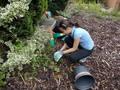110717_Courtyard Gardening (13).JPG