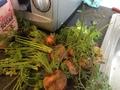 Carrots Raw.JPG