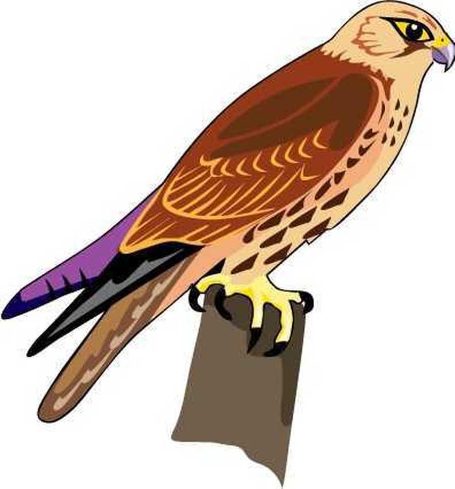 Falcon Y4