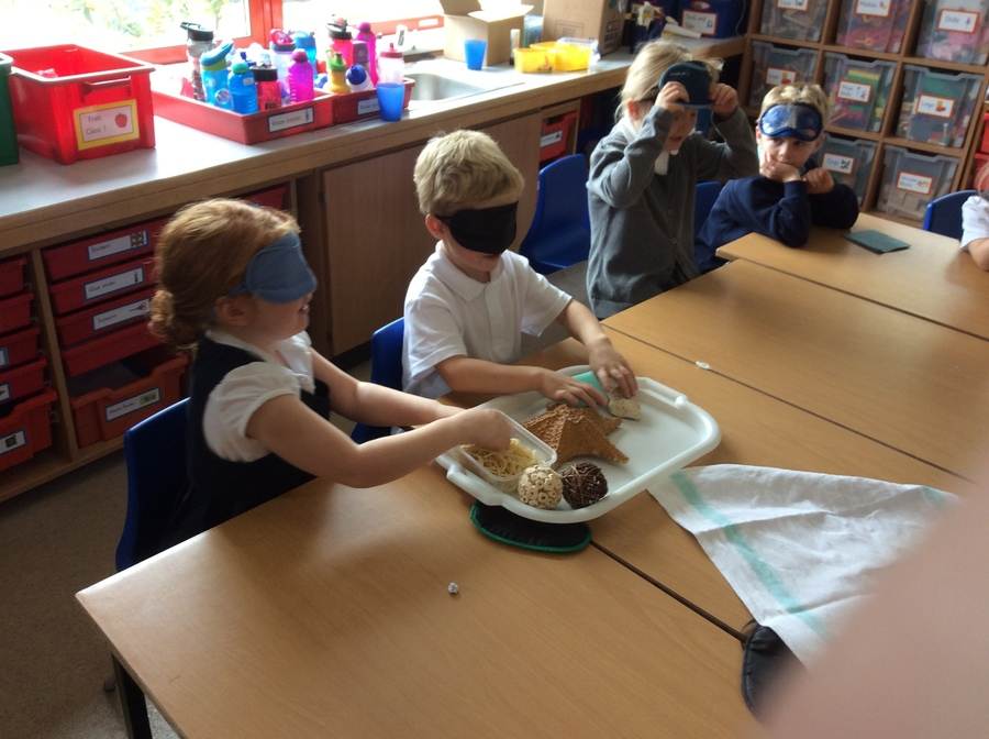 Using our senses to investigate in Science