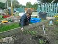 planting (1).JPG