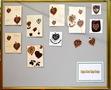 PS 60th badge designs websize-20.JPG