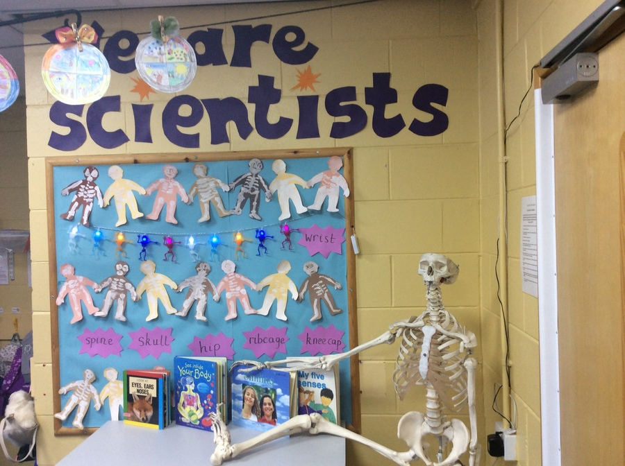 Our Skeleton Display