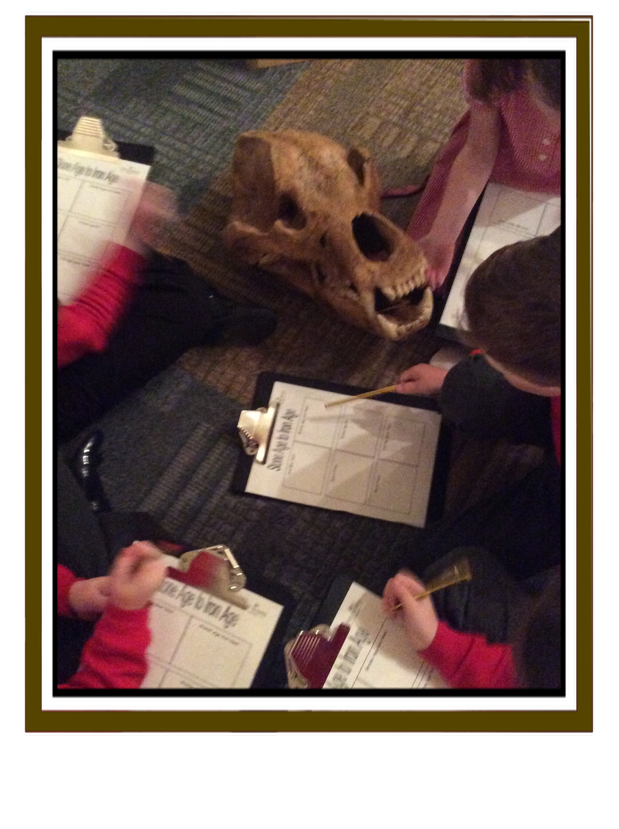 Sabre-toothed Cat Skull
